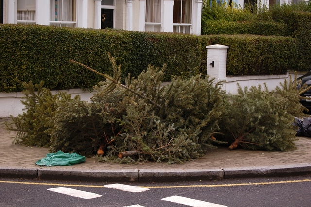 Christmas trees on the pavements, probably fell from the sky